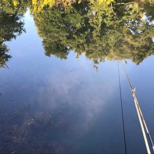 2020年 10月 ヘラブナ釣り 三つ池 その8
