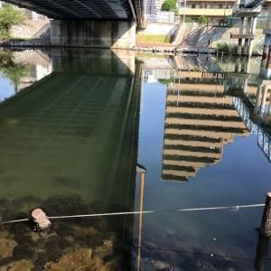 2019年 ハゼ釣り その2 下町水路調査