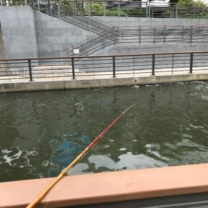 2019年 ハゼ釣り その4 下町水路