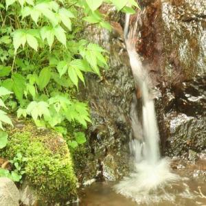 下半身のリハビリになったかな……? 岡山県立森林公園