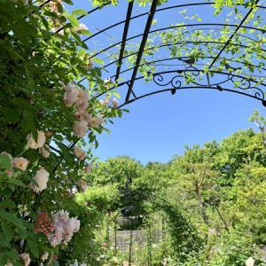 お山の薔薇庭へ打ち合わせに