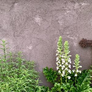 Ququri 初夏の植物たち