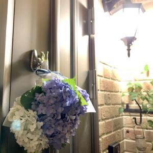 紫陽花守を掛けました