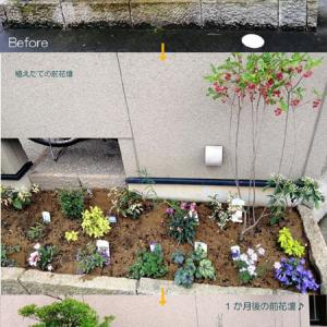 お友達の小さな花壇