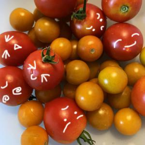今年最後のトマト