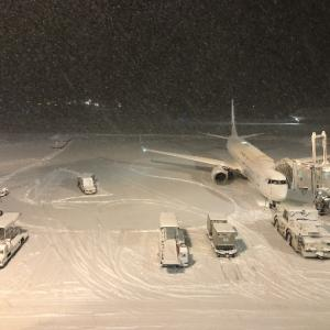 国内線の特典航空券で欠航が発生!航空機遅延保険を使ってみました