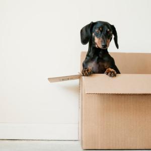 箱という箱をあけて、中身を出す【初心にかえる⑧】
