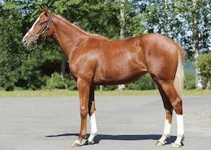 2019 ノルマンディーの募集馬と申込みと続々満口と。