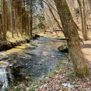 新緑の季節 滝川渓谷へ