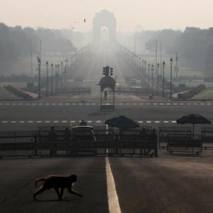 海外 猿がコロナウイルスの血液サンプルを盗む ー インド