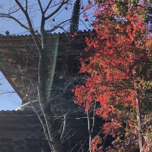 讃岐山脈を染める紅葉スポットとは・・!?