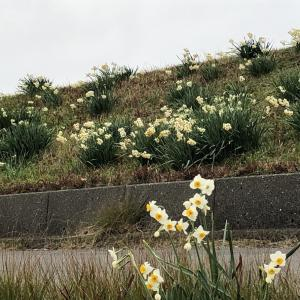 去年のリブログですが、節分が過ぎると聞こえる春の足音!?