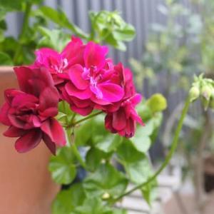 花と戯れる日々