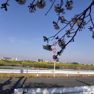 自宅から茨城の実家まで自転車で行ってみた【準備編】