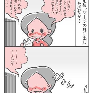 シュッちゃんのかくれんぼ(1)
