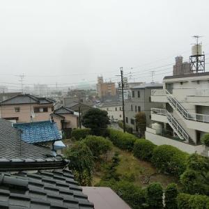 台風の一日になりそうだ