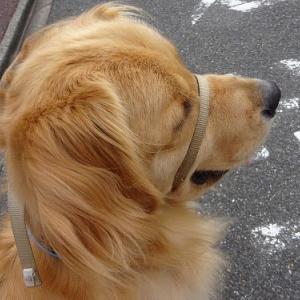 ママだけ散歩だと思ったらパパが追いかけてきた~(^^♪