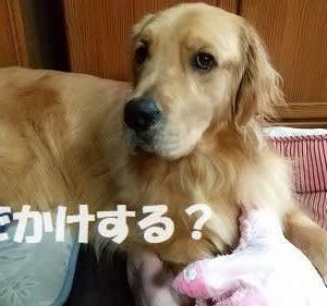 せっかく行ったのに残念~( ;∀;)