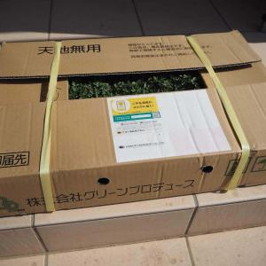 クラピアK7を楽天で購入した口コミレビュー〜マニュアルと肥料付きで初めてでも安心