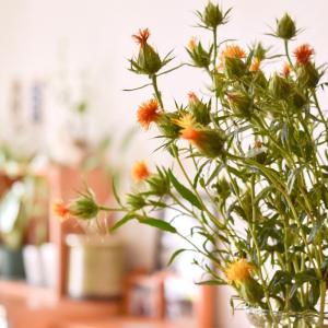 【花のある暮らし】初心者さんでも大丈夫!失敗しない花選びと飾り方のコツ。