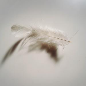 天使の羽?