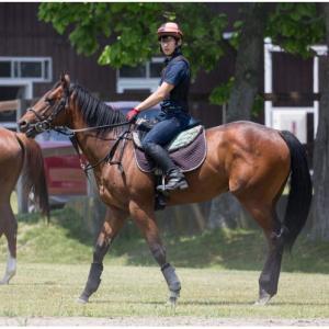 シルク2019年募集馬預託予定厩舎&募集価格発表