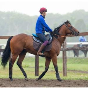 シルクホースクラブ2019年度募集馬カタログPDFと測尺発表