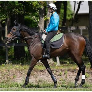 シルクホースクラブ2019年度募集馬カタログ到着