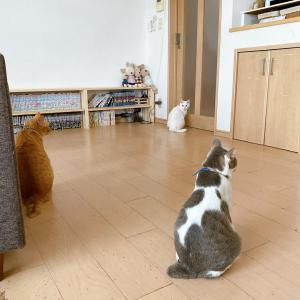 ネコのくせに牛柄なんて変じゃね?とは、誰も気にしていない。