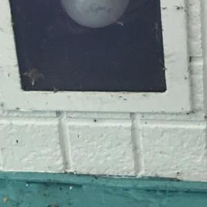 街中の蜘蛛