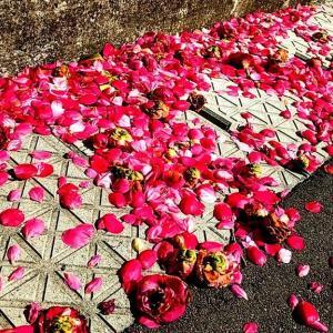 ★牡丹と薔薇懐かしい