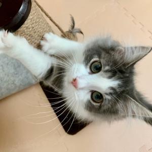 頭痛と猫の付き合い方