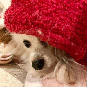 メガネと犬服。
