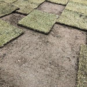 【TM9芝生DIY】雨上がりに芝生張りをしました