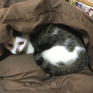 三浦家の猫たち 第二回『三浦ミルクの説明書』