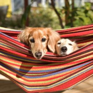 愛犬とキャンプに行きたい!持ち物リストとあると便利なもの特集
