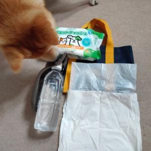 犬お散歩バッグの選び方、散歩の持ち物って??我が家のお散歩バッグの中身も紹介!