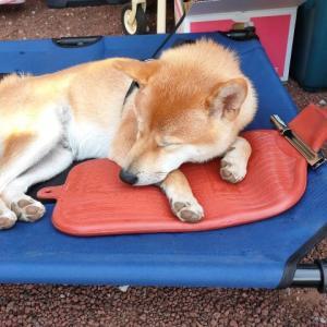犬連れキャンプ 夏の暑さから犬を守るために実践したこと