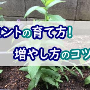 ミントの育て方や増やし方のコツ!庭で栽培して蚊対策に!