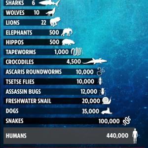 危険動物ランキング!ビルゲイツも指摘する最も人間を殺す生き物は?