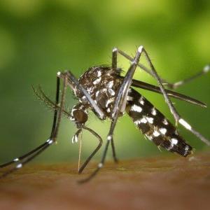 蚊退治には蚊取りトラップ!自作して庭の蚊を駆除!