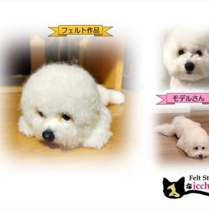 登録者数140万人「関根りさ」さんの愛犬「ハナマサ」の作品が紹介されたよ~!!
