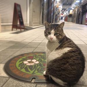 羊毛フェルト「道後温泉」の看板猫「たまちゃん」を作成しています。
