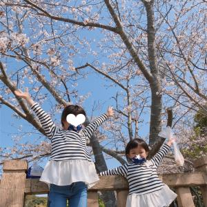 桜もうすぐ満開