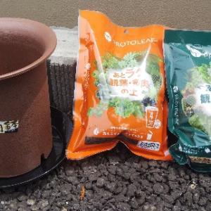 【初心者でも成功!】観葉植物パキラの植え替えをしました。