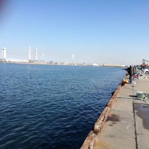 富津新港で初釣り2019 2 3