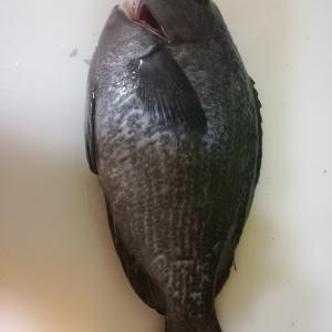 3連休だし館山築港に釣りに行ってきた(2019/07/13)