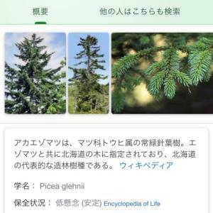 森♪ 北海道に「ピアノの森」があるらしい!