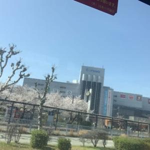 桜が、終わり