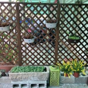 防疫在家惹花拈草